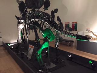 小2恐竜 .JPG